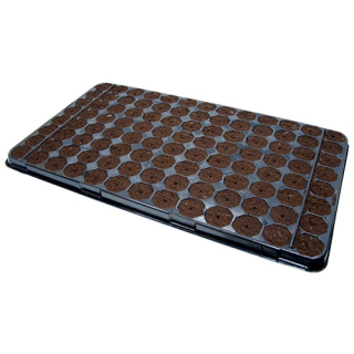 Stecklingstray 104 Stück, leicht befeuchtet